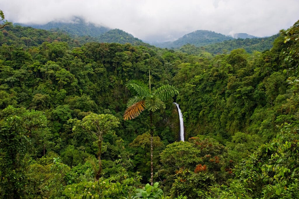 Rain Forest Costa Rica by Tripps Plus